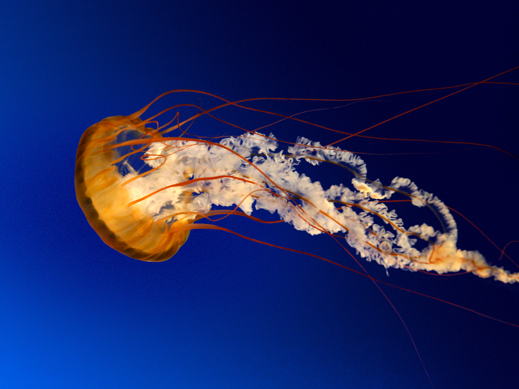 TEST/Jellyfish.jpg